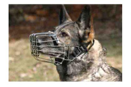 Bozales para perros : Tipos y consejos
