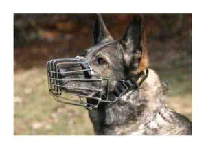 bozales para perro 1