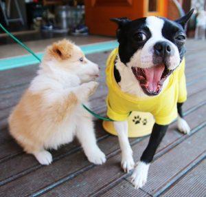 cachorros de perros