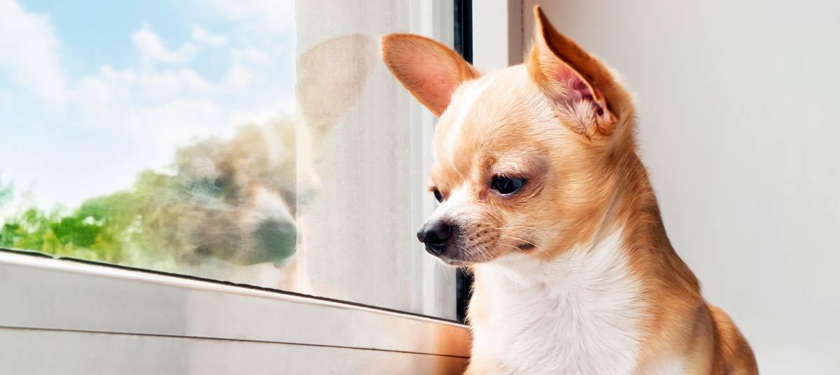 perro ventana